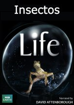 Life: Insectos
